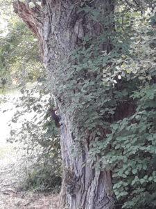 Un écureuil qui attends votre visite